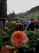 muenstermarkt-rose140628