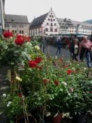 rosen-muensterplatz140422