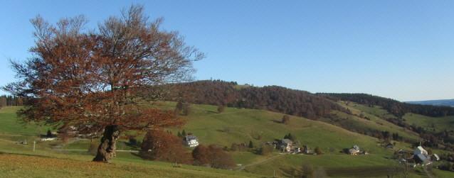 Blick nach Norden über Wetterbuche und Hofsgrund zum Schauinslandturm am 25.10.2012