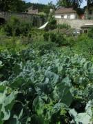 Kartausgarten 4.8.2012 - Kohl und anderes Gemüse