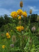 Kartausgarten 4.8.2012 - Blütentraum - Blick nach Nordosten