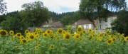 Kartausgarten 4.8.2012 - Sonniger Blick nach Norden zur Alten Kartaus