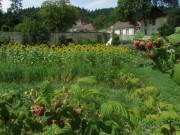 Kartausgarten 4.8.2012 - Himbeeren - Blick nach Norden