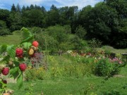 Kartausgarten 4.8.2012 - Himbeeren - Blick nach Osten
