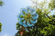 Wirbelblume von Rüdiger Krenkel am Schlossberg