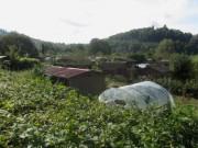 Wonnhalde 4.10.2012 - Blick nach Südwesten über die Kleingärten