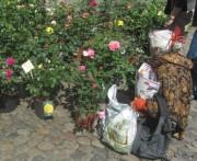 blumen4muenstermarkt140419
