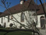 feigen-johanneskapelle151116