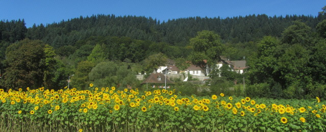 Blick nach Norden zur Kartaus im Freiburger Osten am 21.9.2012