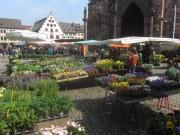 muenstermarkt15blumen140327