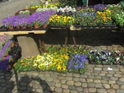 muenstermarkt28stiefmuetterchen140327