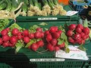 muenstermarkt7radieschen140327