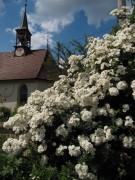 rosen-johanneskapelle140722
