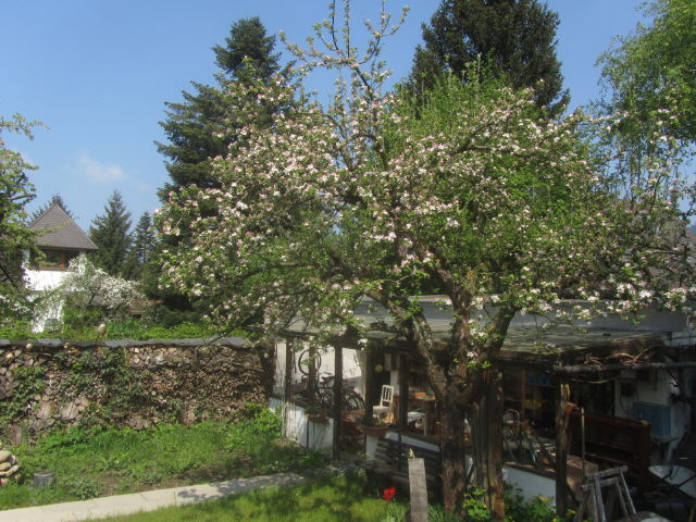 apfelbaum130505