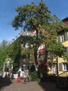 Insel 4.10.2012 - Blick nach Westen vom Schwabentorring - rechts Gewerbebach