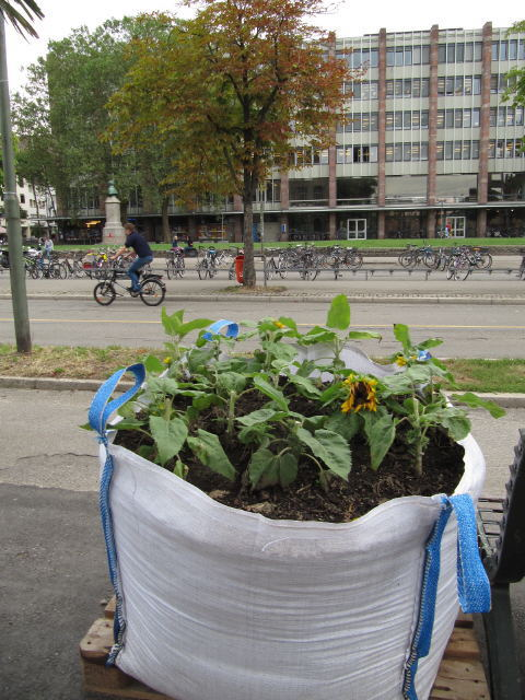 uniplatz1garten130826