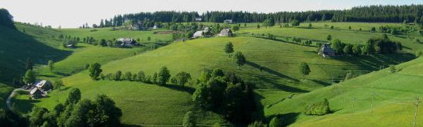 Blick von der Stohrenschule nach Norden zum Gießhübel am 18.5.2009 - gelber Hahnenfuß überall