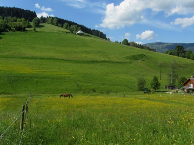 weilersbach3pferde130528