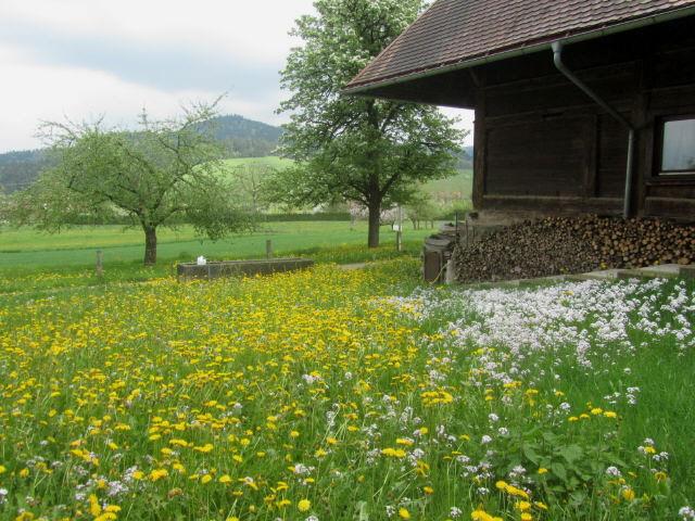 dietenbach-fussehof130507