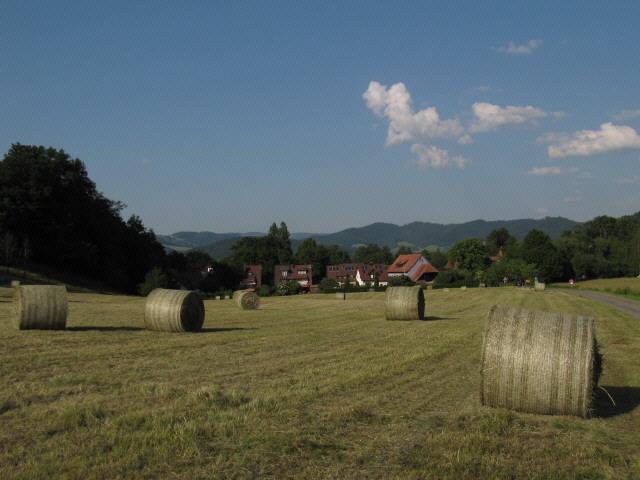 dietenbach2grasballen130620