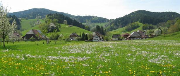 Blick vom Rössle nach Süden ins Dietenbach am 1.Mai 2009 - oben links die Anhöhe Immi