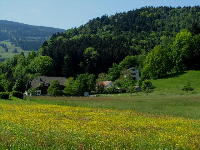 schirkenhof-gelb130528