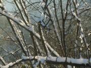 schnee-zweige150101