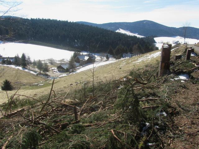 ehrsberg11waldmatt30316