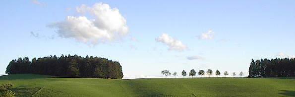 Blick nach Süden zur Römerstrasse auf dem Zwerisberg bei St.Märgen am 22.8.2004