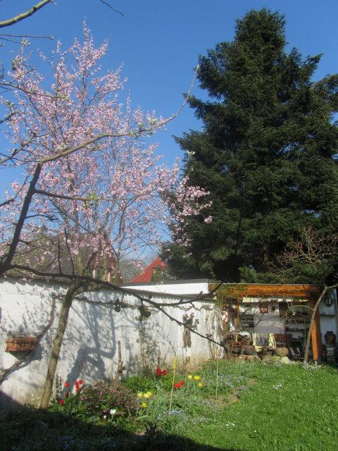 garten-pfirsich130423