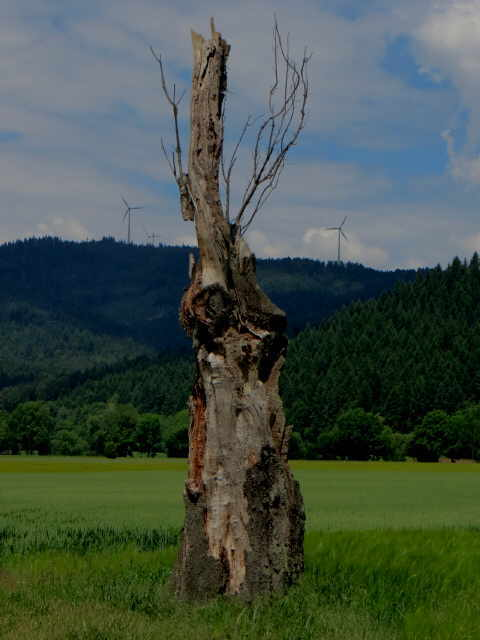 Baum-Torso140520