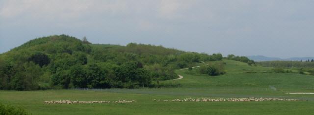 Blick nach Westen über eine Herde von Schafen zum Moosbuck (Monte Scherbelino) am 7.5.2013