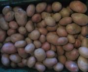 baldenwegerhof-kartoffeln140129