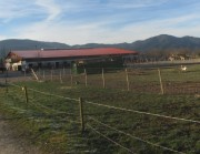 baldenwegerhof-pferde140129