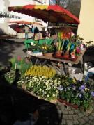 markt-littenweiler-blumen131109