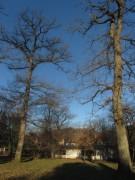 kapriole1konrad-guenther-park131217