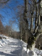 hofsgrund26buchenwald140131