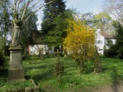 alterfriedhof3forsythie140327