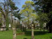 alterfriedhof5eiche140327