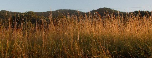 auch das ist Freiburg: Hohes Gras  und Berge am 4.7.2014
