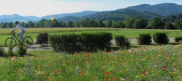 Blick  über Wildblumen bei der Annakapelle in Freiburg-Ebnet nach Osten ins Dreisamtal bis hoch zum Schwarzwald anfang Juli 2014