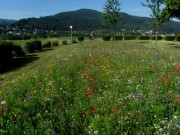 wildblumen2littenweiler140703