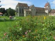 reichenau8muenster-kraeutergarten140812