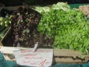 freiburg-markt3salat140902