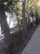 isfahan5baechle141016