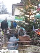 weihnachtsmarkt4kuzenhof141207
