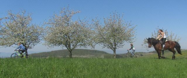Kirschblüte im Eggenertal am 19.4.2015 - mit dem Pferd unterwegs