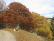 schauinsland-herbstfarben151103
