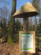 waldhaus3mycelium150412