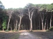 orbetello7feniglia-radweg150501
